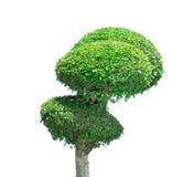 Green small tree Stock Photography