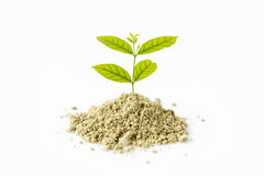 Green small tree in ground isolated on white background Royalty Free Stock Photos