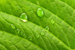 Green smile. Smile made of water on the green leaf Stock Photography