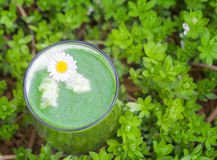 Green Smoothie in Woodruff. Green Smoothie in fresh Woodruff royalty free stock photo
