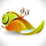 Green snail on the leaf Stock Photography