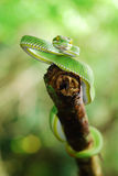 GREEN SNAKE. From Chedkhod nation park, Thailand stock images