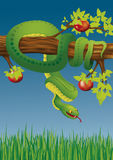 Green snake. On the apple tree branch, coming down to the grass; Drawing on the biblical theme; vector illustration Royalty Free Stock Image