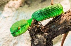 Green Snake creeps on tree Royalty Free Stock Photo