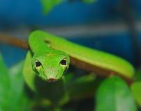 Green snake in the garden Stock Images