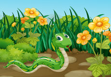 Green snake in garden stock photography