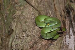 Green snake in rain forest royalty free stock images