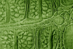 Green Snake Skin Stock Photography