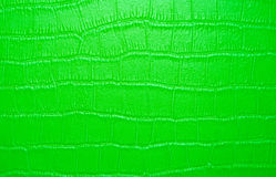 Green snake skin texture Royalty Free Stock Photography