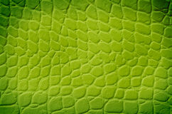 Green snake texture Stock Image