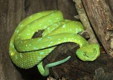 Green Snake Stock Images
