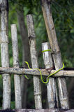 Green snake on fence Royalty Free Stock Images