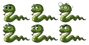 Green snakes with different emotions Royalty Free Stock Images