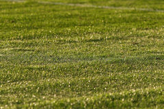 Green soccer football field Stock Images