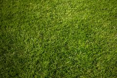 Soccer meadow background royalty free stock photos
