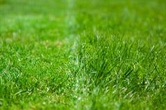 green soczysta trawy ciie trawy Fotografia Stock