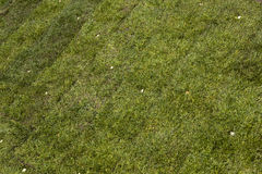 Green sod grass Royalty Free Stock Photo