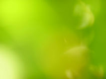 Green Soft Focus Blurred Background. Yellow Light Stock Photo