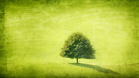 Green solitaire grunge. Single green tree in grunge background Stock Images