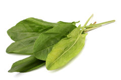 Green sorrel leaves Stock Image