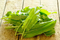 Green sorrel leaves Stock Photo