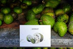 Green soursop fruit Royalty Free Stock Photography