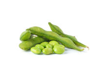 Green soybeans Stock Image