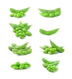 Green soybeans on white background Stock Photos