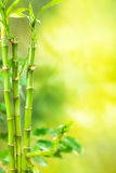 Green Spa - bamboo background Stock Photography