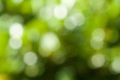 Green sparkle Stock Photos