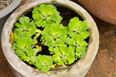 Green spawn in the  water Royalty Free Stock Photos