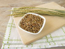 Green spelt and spelt ears Royalty Free Stock Photography