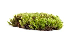 Green Sphagnum Moss Isolated On White Background Royalty Free Stock Photography