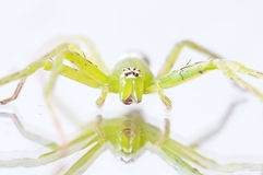 Green spider!. Cute Green Spider with Reflection Royalty Free Stock Photos