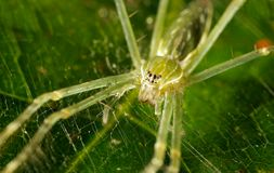 Green spider. A green spider on a green leaf Royalty Free Stock Photo