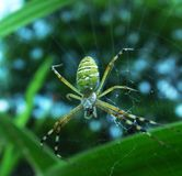 Green spider Royalty Free Stock Photo