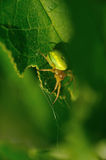 Green spider. Stock Photos