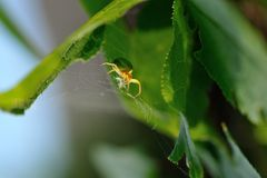 Green spider. Stock Photo