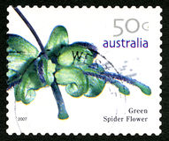 Green Spider Flower Australian Postage Stamp Stock Images