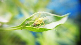 Green Spider on Green Plant Leaf Royalty Free Stock Image