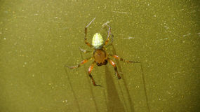 Green spider metallic. Little cucumber green spider on green metallic surface Stock Photos