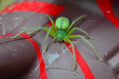 Green Spider. Spreading on a piece of plastic Stock Photography