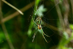 Green spider Stock Photo