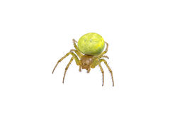 Green spider on a white background Royalty Free Stock Images