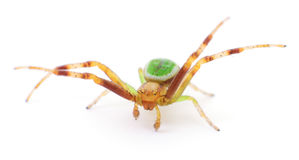 Green spider on white. Royalty Free Stock Photos