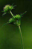Green spike of grass macro Stock Photo
