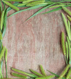 Green spikelets on the background of wood. Green ears on brown background retro wood Stock Images