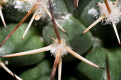 Green spikey cactus Royalty Free Stock Images