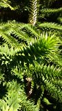 Green spikey leaves. Spikey green leaf plant Stock Photos
