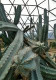 Green Spiky cacti  in geodesic dome in Suan Luang Phra Ram IX Park Royalty Free Stock Photos